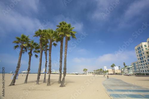 Staande foto Los Angeles Palms and the pier at Santa monica beach in Los Angeles