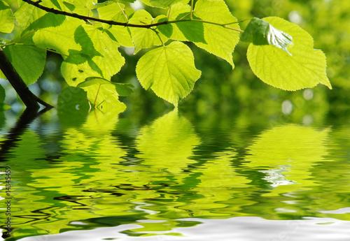 Akustikstoff - Blätter mit Sonnenlicht und Wasser
