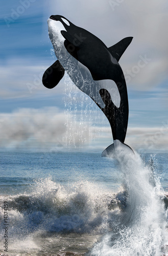 Foto-Rollo premium - orca free willy (von Mathias Weil)