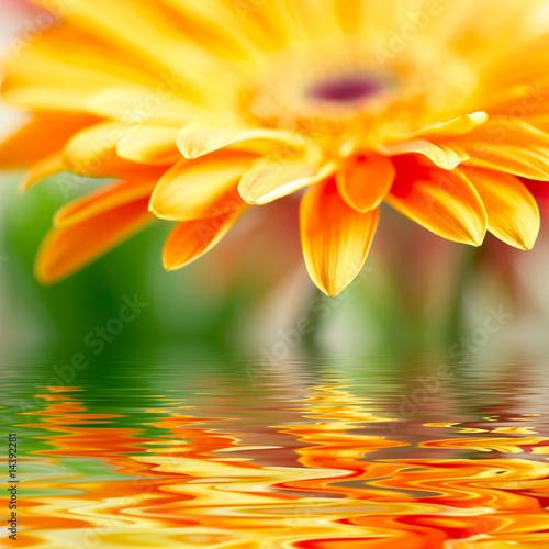 Foto-Kissen - Closeup photo of yellow daisy-gerbera