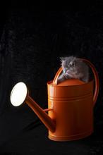 Stock Photograph Of A Kitten I...