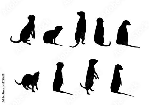 Fényképezés  meerkat silhouettes (Suricata suricatta)