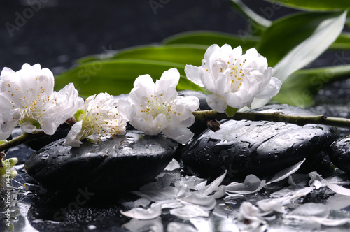 Tuinposter Spa Wet stones and flower, petal with green leaf