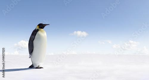 Foto-Fußmatte - Penguin (von Jan Will)