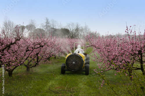 Fotografía  spraying of peach