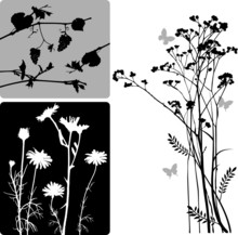 Real Plants Silhouette - Vector Set