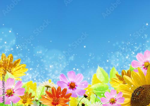 Zdjęcie XXL Letnie kwiaty