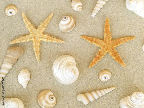 Foto-Leinwand - Muscheln und Seesterne