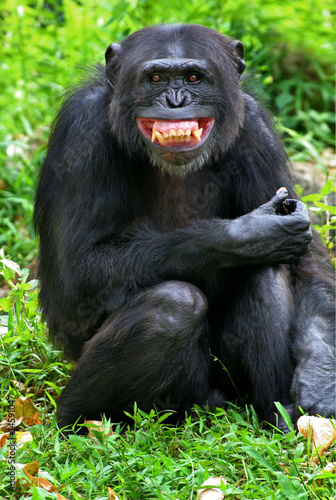 Obraz smile - fototapety do salonu