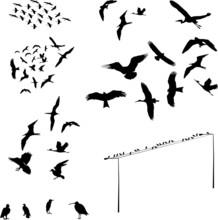 Set Of Bird - Vector