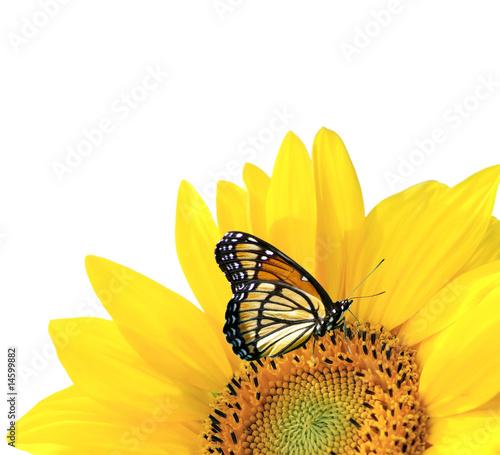 Foto-Fußmatte - Yellow sunflower with butterfly isolated (von majeczka)