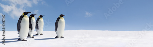 Photo sur Aluminium Antarctique Penguin Panorama