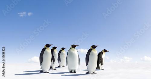 Photo sur Toile Pingouin Penguins