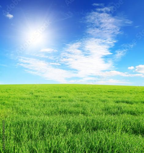 Foto op Plexiglas Platteland Summer field