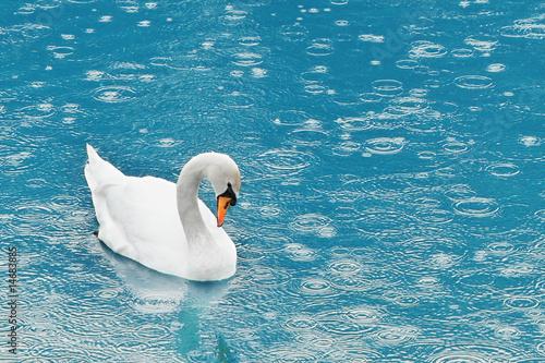 Foto-Fußmatte - swan (von ivan kmit)