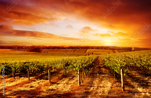 Spoed Foto op Canvas Rood traf. Amazing Vineyard Sunset