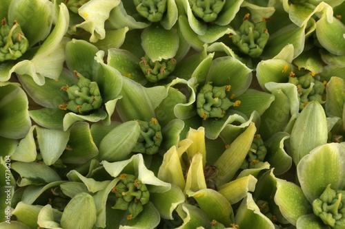 Fond De Fleurs D Agave Buy This Stock Photo And Explore Similar