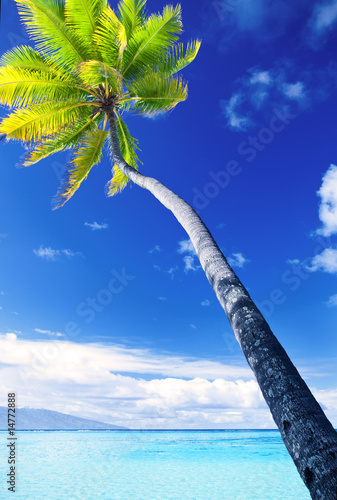 Foto-Leinwand - Palm tree hanging over stunning blue lagoon