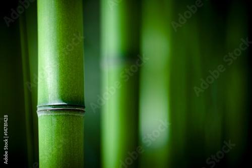byl-bambou