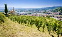 Grand Cru Vineyard, L´Hermitage, Rhône-Alpes, France