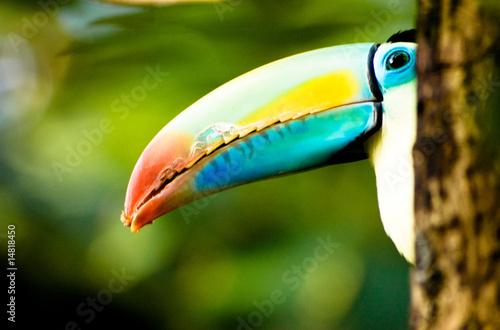 Fotobehang Toekan Karibischen Inseln