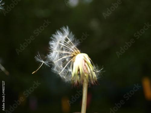 blow-ball - 14837227