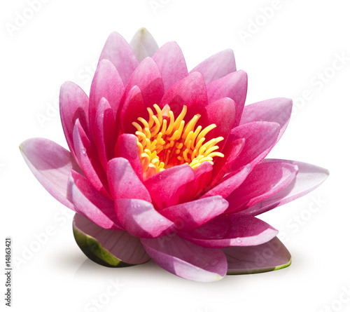 Foto op Canvas Lotusbloem fleur de lotus sur fond blanc