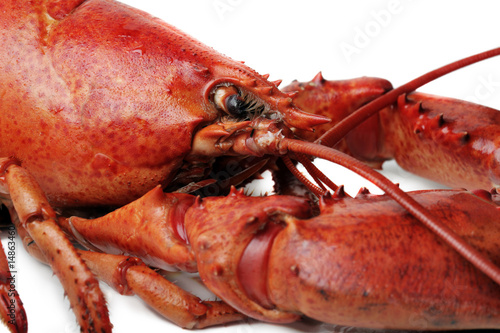 Poster Coquillage red lobster on white background