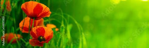 Photo sur Toile Vert chaux bandeau horizontal vert et fleur rouge - nature et coquelicot
