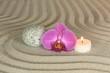 Arrangement mit Orchideenblüte