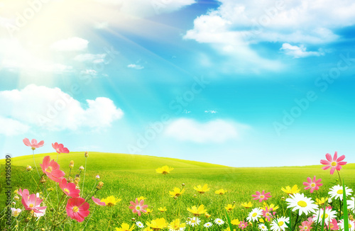 Wall Murals Spring Spring flowers