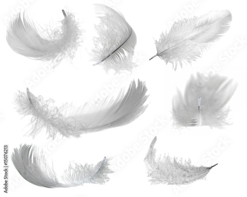 seven white feathers
