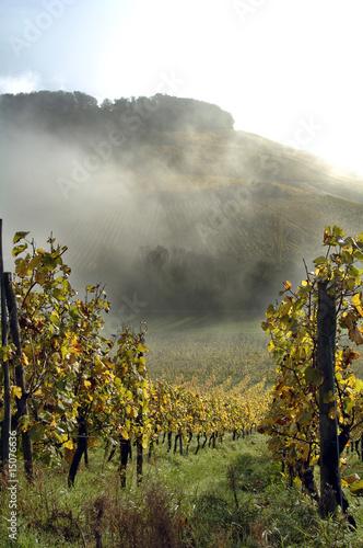 Fototapeta winnica   wellenstein-jesienna-winnica-luksemburg-mozela