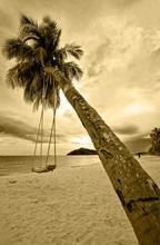 Swing On The Palm Tree