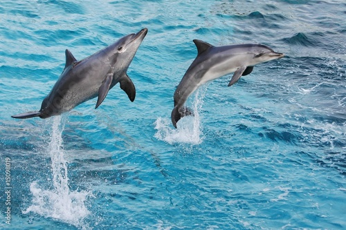 Wall Murals Dolphins Dolphins Jumping