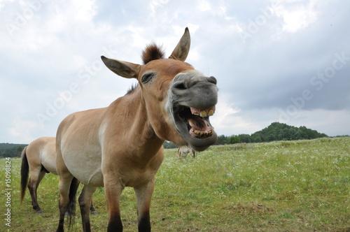 Fotobehang Ezel Przewalski Pferd