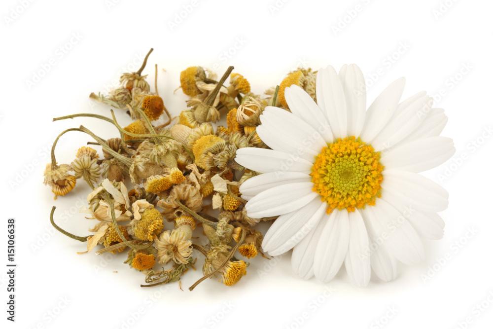 Fototapety, obrazy: Dried chamomile tea isolated on white background