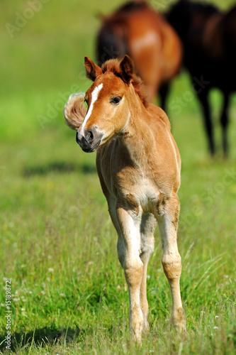 Foto-Schiebevorhang (ohne Schiene) - Horse (von kyslynskyy)