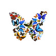 Schmetterlinge in Form eines Schmetterlings