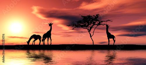 Poster Corail Family of giraffes.
