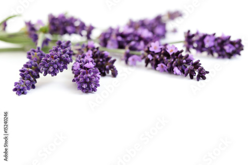 Photo  lavender flowers