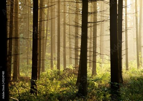 wieczor-nastroj-w-lesie
