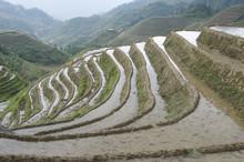 Jinkeng Rice Terraces In Guanxi, China