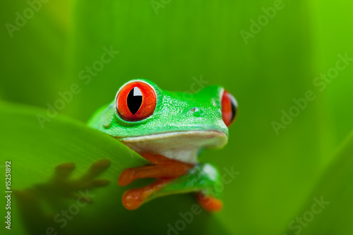 Tuinposter Kikker frog in a plant
