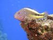 Bunte Unterwasserwelt mit Fischen und Korallen