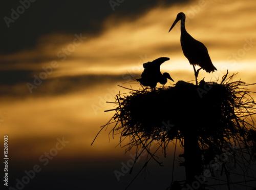 Foto-Schiebevorhang (ohne Schiene) - storks in the nest (von bertys30)