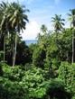 Vegetation in der Karibik