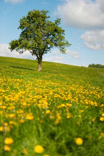 Foto-Kissen - Tree in flower fields