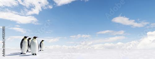 Fototapeta premium Panorama pingwina