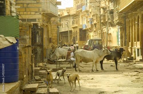 Poster de jardin Vache vache sacrée en Inde